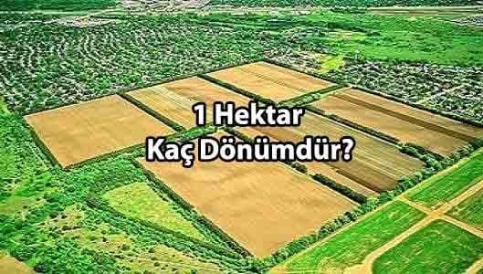 Hektar Nedir? 1 Hektar Kaç Dönümdür?
