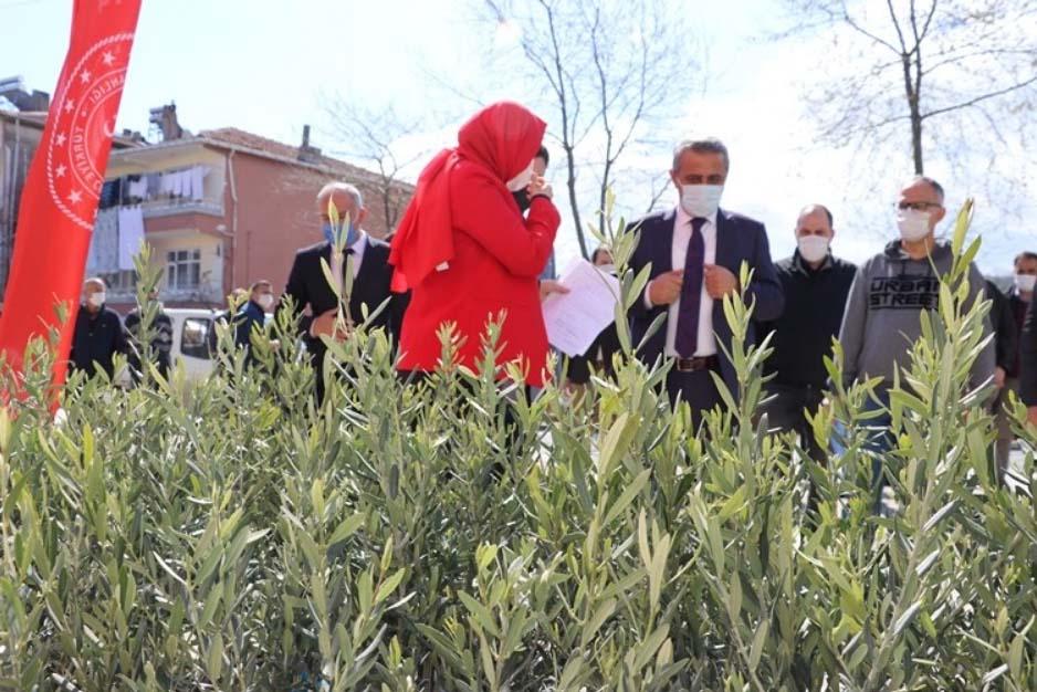 Samsun'da 7 bin 500 zeytin fidanı ekildi