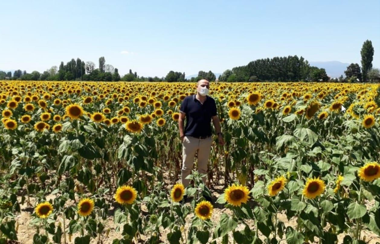 Simav İlçe Tarım ve Orman Müdürlüğünden Ay Çiçeği Projesi