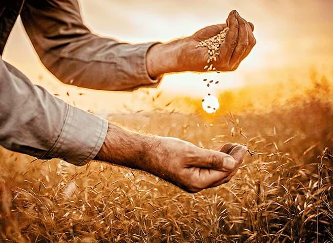 Tarım sektöründe hangi alanlanlar kısıtlamadan muaf